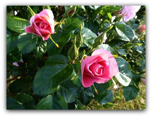 Närbild på dess vackra blommor!