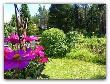 Kerriabusken sedd från baksidan...